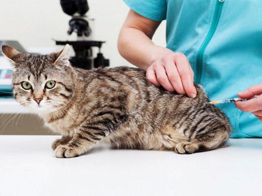 Centro Veterinario Los Colorados - Vacunación a mascotas
